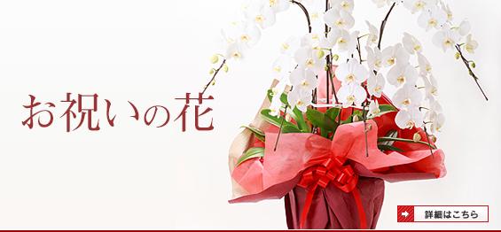 お祝いで花を贈る