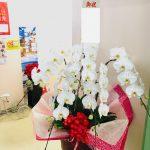 創設100周年のお祝いに胡蝶蘭をお届けしました