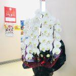 筑後市にオープンしたコンテナ店舗のCAFEへ胡蝶蘭をお届けしました