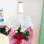 (株)ニシケン様へ新社長就任のお祝い胡蝶蘭をお届けしました。