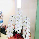 日商保険コンサルティング(株)様へ新社屋完成お祝いの胡蝶蘭をお届け致しました。