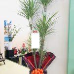お祝いの観葉植物をお届けしました。