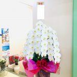 丸久鋼材(株)様へ新工場完成お祝いの胡蝶蘭をお届けしました