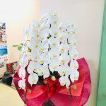 佐賀大学医学部付属病院まで教授就任お祝いの胡蝶蘭をお届けしました