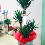 (株)ウシパーツ様新工場完成お祝いの観葉植物を八女郡広川町までお届けしました